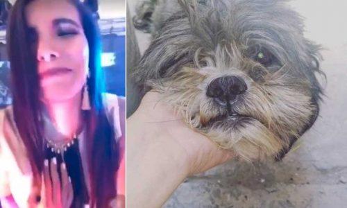 """Una conductora de televisión atropelló a un perro y se grabó riéndose:""""Fue culpa del perro"""""""