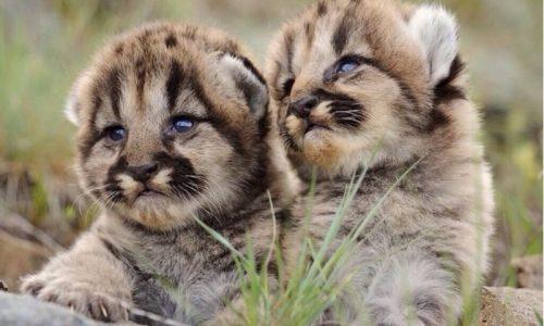 19 Animales que probablemente nunca hayas visto de bebés
